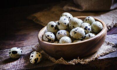 Bıldırcın yumurtasının faydaları neler? Bıldırcın yumurtasının…