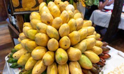 Mangonun faydaları nelerdir, neye iyi gelir? Mango nasıl yenir,…