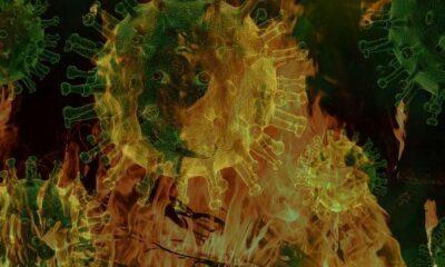 Yangınlar ve mikroplar arasındaki bağlantı araştırıldı