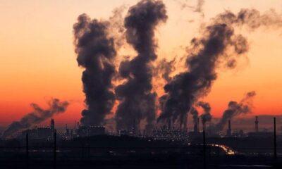 Çevre kirliliği penis boyutunun küçülmesine neden oluyor
